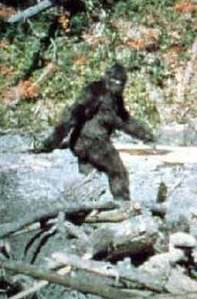 Bigfoot pic